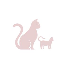 Kitten & Senior